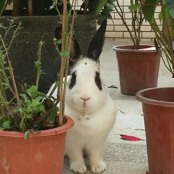 越狱的公兔5323