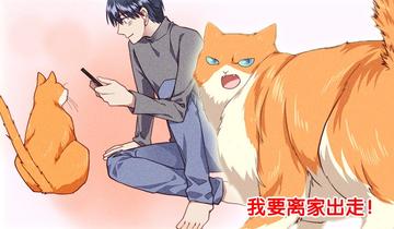 如何让你的橘猫减肥第4话 灵活的胖子