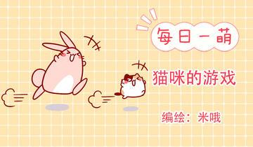 肥喵与兔纸第246话 猫咪的游戏